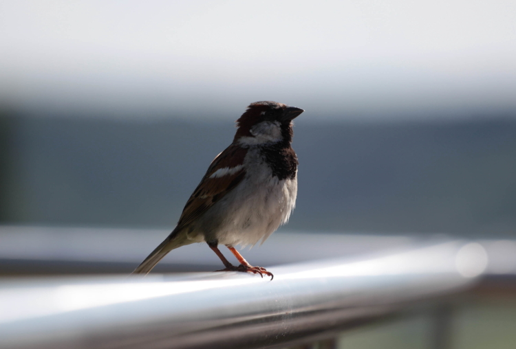 Greedy Birds_01