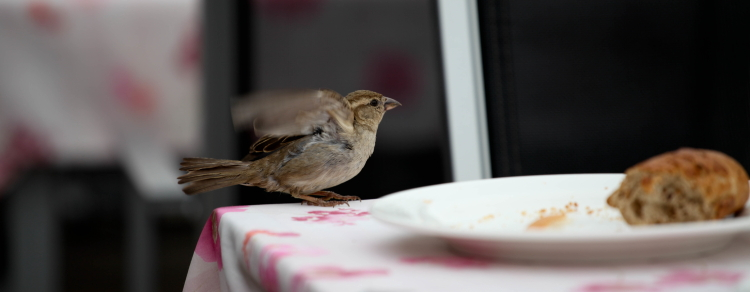 Greedy Birds_04