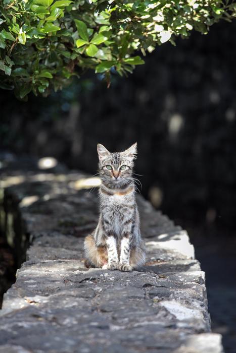 cat_ambweb_sml