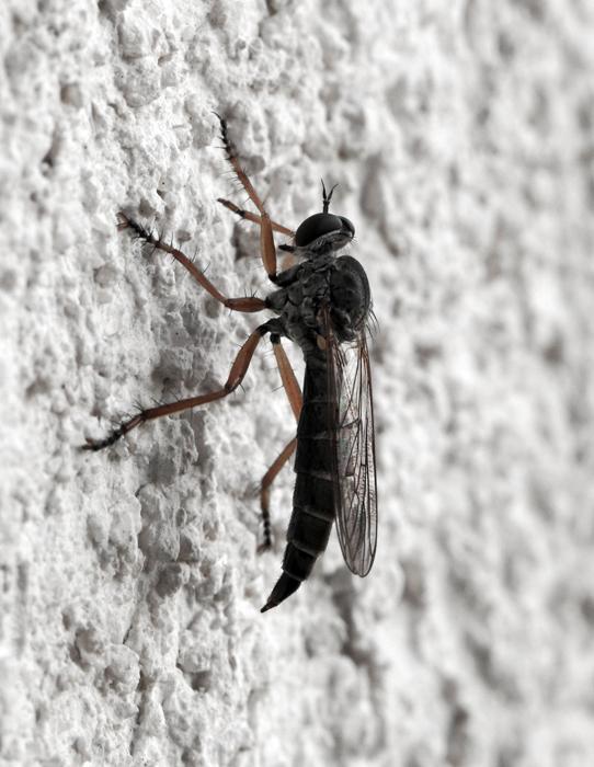 fly_AMBWEB-1