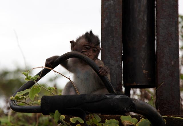 A Monkey at Tanah Lot Temple